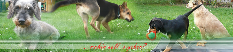 Hundepension Berlin