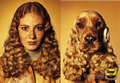 Vorschau Besitzer und Hund